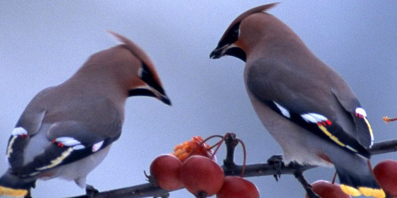 birds cropped 2