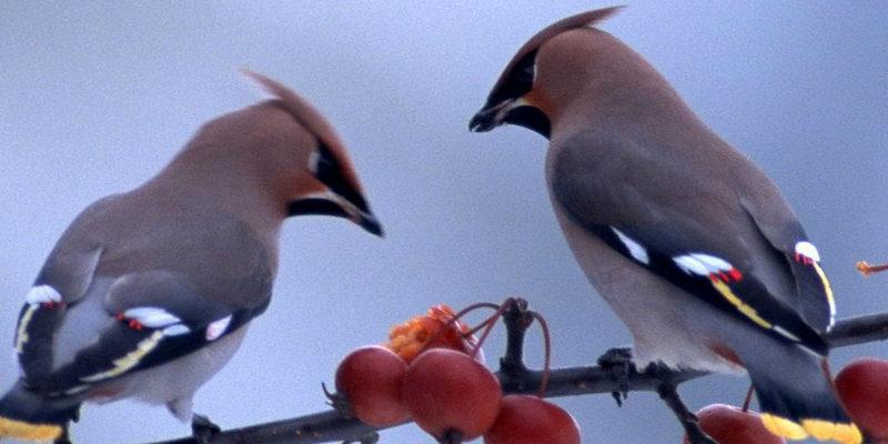 birds cropped 2